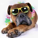Fotoshoot met huisdieren hond