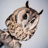 Fotoshoot huisdieren met uil bij Shoots and More