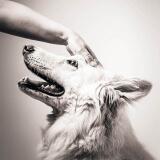 lieve foto hond met baasje