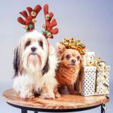 Kerstfoto fotoshoot bij Shoots & More