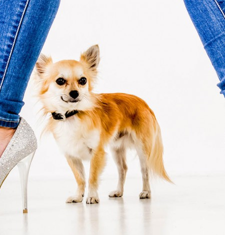 Fotoshoot met huisdieren in fotostudio Shoots & More Den Haag
