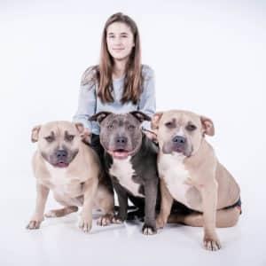 Fotoshoot met drie honden