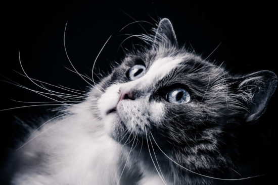 huisdieren fotoshoot bij Shoots & More Breda fotografie