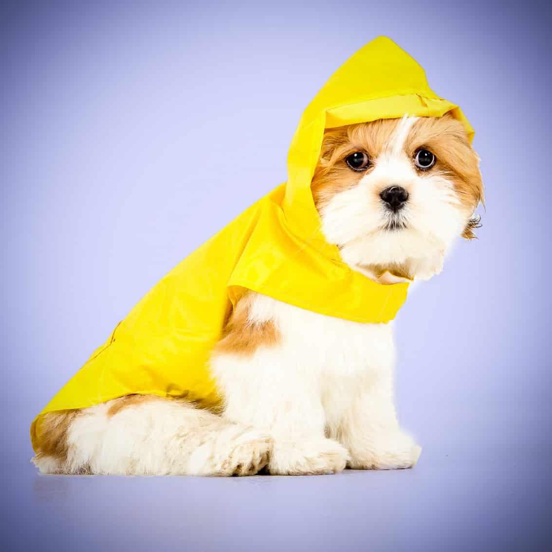 Huisdierenshoot met hondje in regenpakje bij Shoots & More Breda