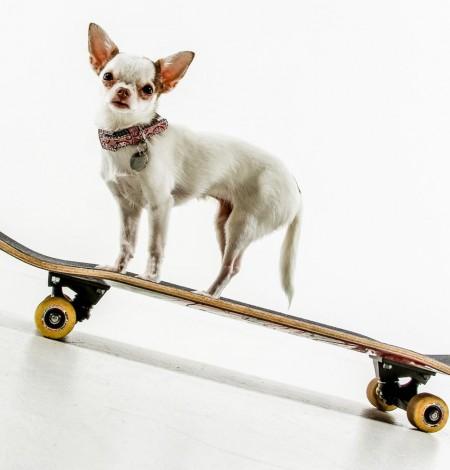 hondje op de foto in fotostudio va Shoots & More Den Haag