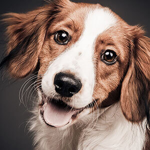 foto hond