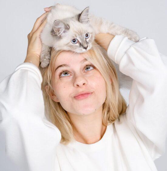 Katten fotoshoot