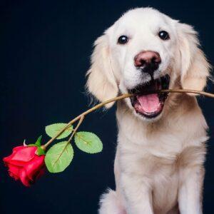 Hond fotoshoot